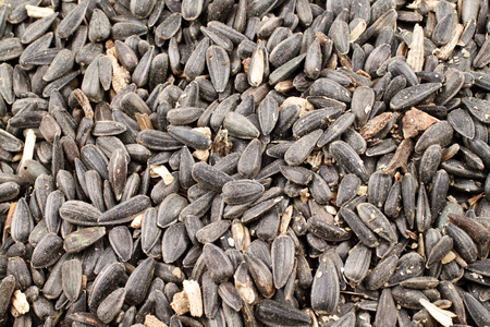 A close up image of black sunflower seeds Imagens