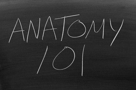 The words Anatomy 101 on a blackboard in chalk Stock Photo