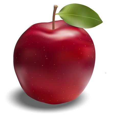 Red apple with leaf in vector.