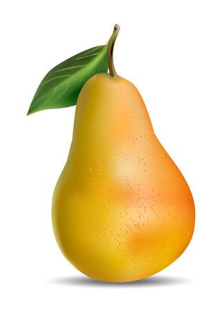 Fruta realista de pera en Vector. Ilustración de vector