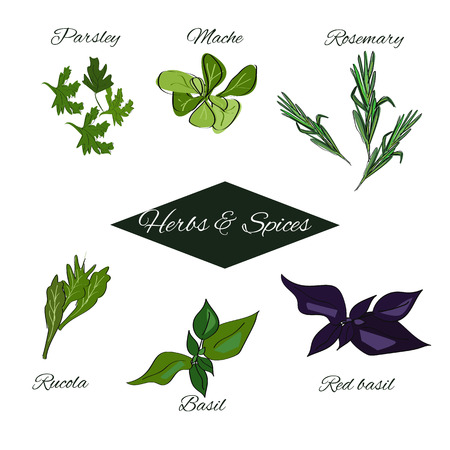 Herbs and spices set. Vector drawn spices of Italian cuisine. Engraving floral sketches with hand lettering text