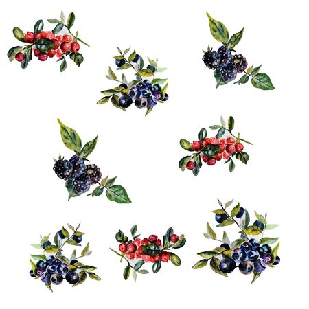 cowberry: Watercolor hand drawn set of wild berries. Stock Photo
