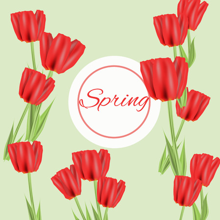 Beautiful spring flowers collection. Vector drown isolated tulips.