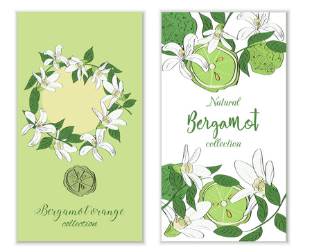 Vertical vectror banners with hand drawn bergamot flowers and fruits. Package design.