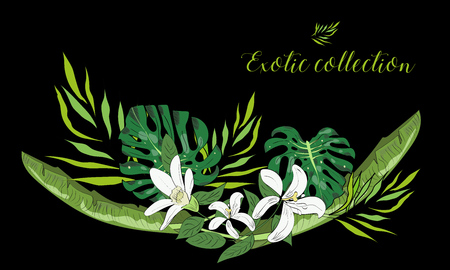 beach party: Tropical hand drawn exotic collection background with leaves and flowers.