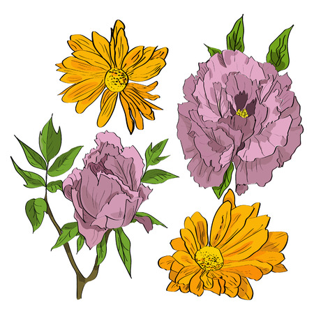 springtime: Vector set of hand drawn rosy peonies and yellow chrysanthemum flowers in a sketch style.