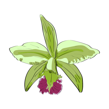 Vector Drawn orchid on white background. Exotic collection.