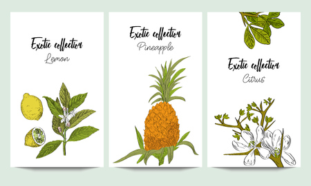 Vertical vector banners of hand drawn exotic collection. Pineapple, citrus, lemon. An idea for design, invitation. Иллюстрация