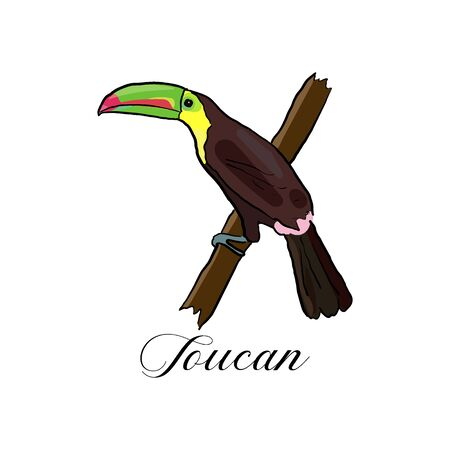 Vector drawn tropical logo symbol of toucan bird on white background. Logo design template. Иллюстрация