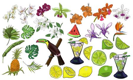Big vector set of hand drawn tropical summer flowers and leaves, fruits and lemonade. Иллюстрация