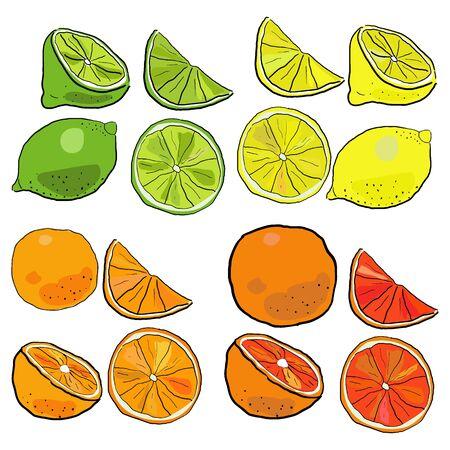 Big vector set of hand drawn citrus fruits. Sketch illustration of lime, lemon, orange and grapefruit. Whole, half, quarter and slice. Иллюстрация