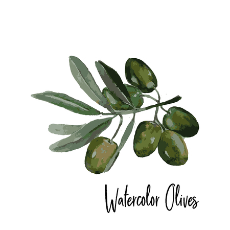 Watercolor hand drawn olive branch icon