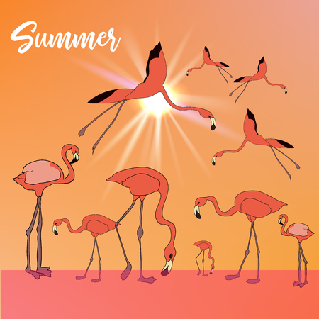 Summer tropical vector banner or flyer with flamingos flying and standing in the river and evening sun.