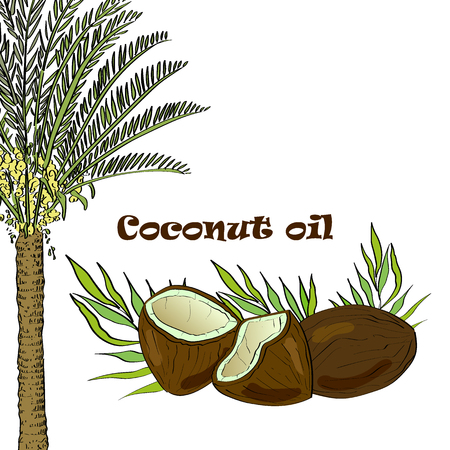 Vector drawn coconut palm and coconuts with leaves. Essential oil design. Package design idea. Фото со стока - 105230408