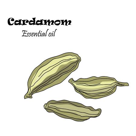 Vector drawn cardamom seeds. Essential oil design. Package design idea.