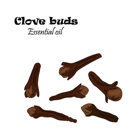 Vector drawn clove buds. Essential oil design. Package design idea.