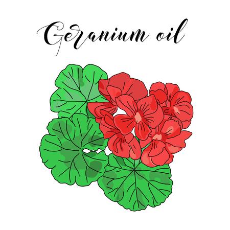 Vector drawn geranium flowers. Essential oil design. Package design idea.