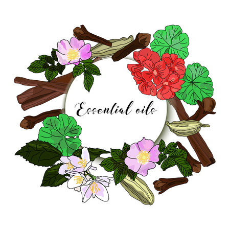 Vector drawn essential oils design banner. Package design idea. Wild rose, jasmine, geranium, cardamom, cinnamon sticks, clove buds
