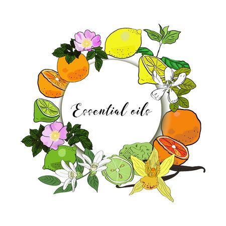 Vector drawn essential oils design banner. Package design idea. Mint, rose hips, jasmine, vanilla, lime, orange, lemon, grapefruit, bergamot.