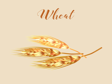 Close up look at wheat isolated on beige background in 3d illustration