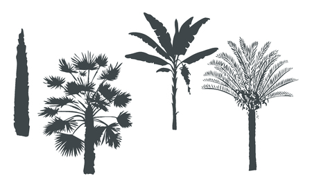 Hand drawn botanical exotic vector set with silhouette palm trees, banana, cypress, cycas on light background.