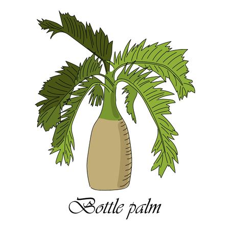 Vector drawn bottle palm tree on white background in a sketch style. Exotic collection.
