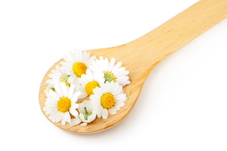 Daisy flowers and wooden spoon isolated on white background