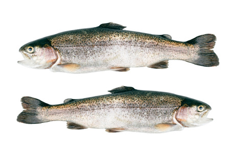 Trout fish isolated on white background. Top view.