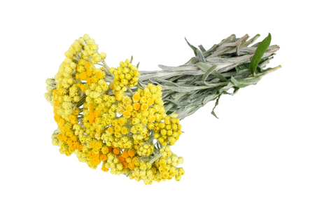 Immortelle flowers isolated on white background