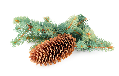 Fir tree branches with cone isolated on white background Banco de Imagens