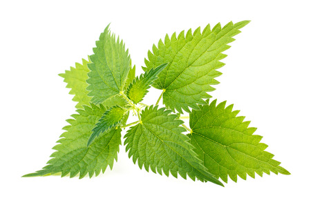 Nettle leaves isolated on white background