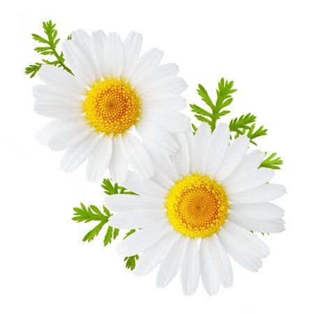 Flores de manzanilla o manzanilla con hojas aisladas sobre fondo blanco