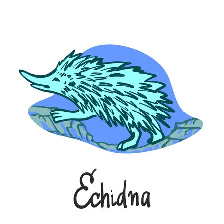 Australian Echidna running over stones on a blue background. Drawn in line graphics, isolated on white background for banners, cards, posters and sites.