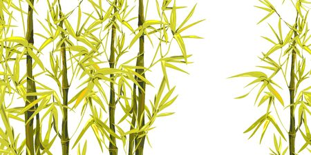 Vector isolated ink bamboo with leaves and branches on a white background. Illustration in Chinese and Japanese style, traditional graphics