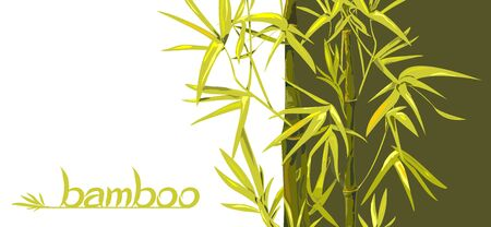 Vector isolated bamboo with leaves and branches on a green and white background. Illustration in Chinese and Japanese style in traditional colors and unique font Vectores