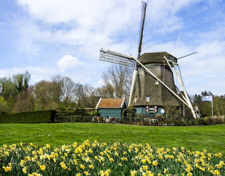 traditional dutch windmill with daffodils, Netherlands photo
