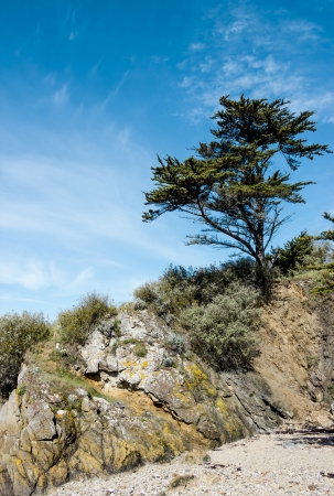 Landscape with a pine tree on a cliff photo