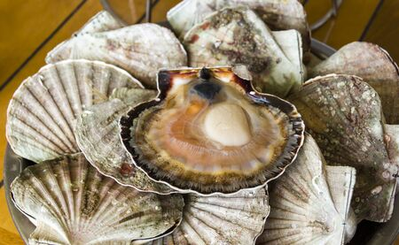 Fresh delicious oysters  closeup  on the dish Stock Photo - 13891288