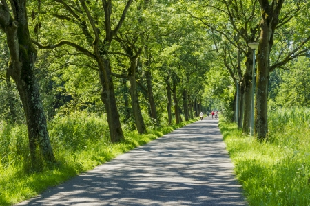treed: Road surrounded by old green trees