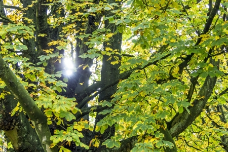 Rays of of the sun filtering through the autumn leaves photo