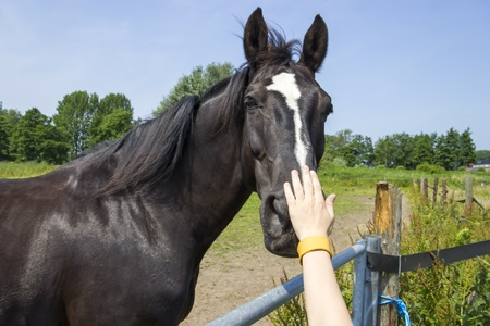 hitching post: Boy stroking horse