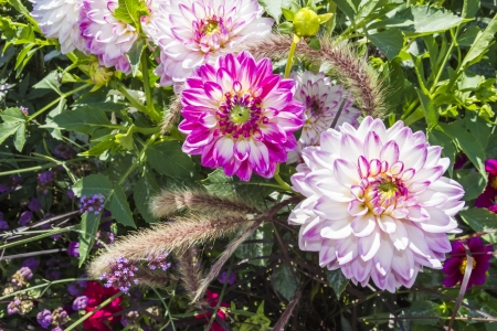 Beautiful colorful flower garden with various flowers photo