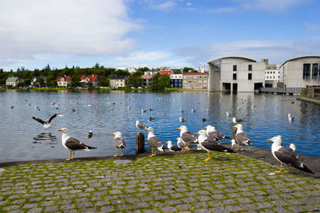 seagulls near a pond in the center of Reykjavik photo