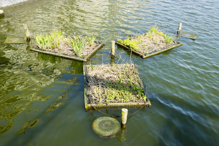 Places for nests on the canals of Amsterdam, the Netherlands photo