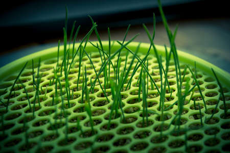hidef: Green grass growing through plastic Stock Photo
