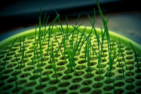 Green grass growing through plastic Stock Photo