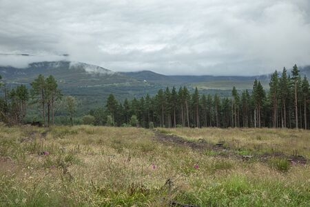 The Cairngorm mountain forest after rain in Scotland