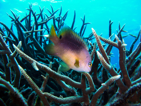 Great Barrier Reef - Coral and Fish photo
