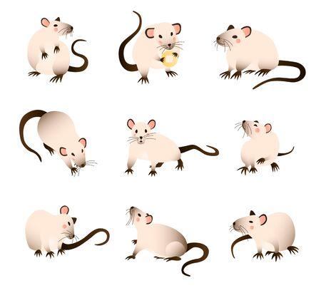 Rats collection. Vector illustration of cartoon, differed colors rats in various poses and actions. Vector illustration