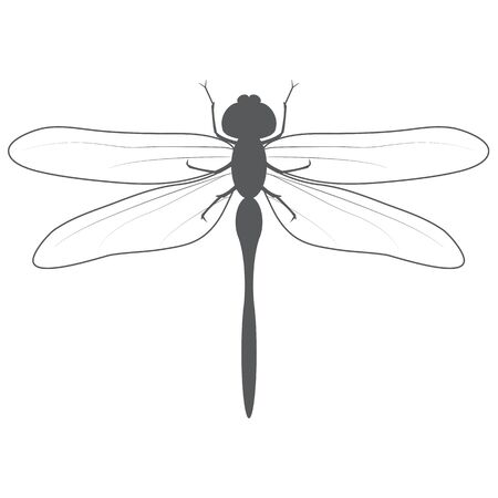 Dragonfly drawn in gray color on a white background.